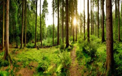 Reflections of Forest Refuge
